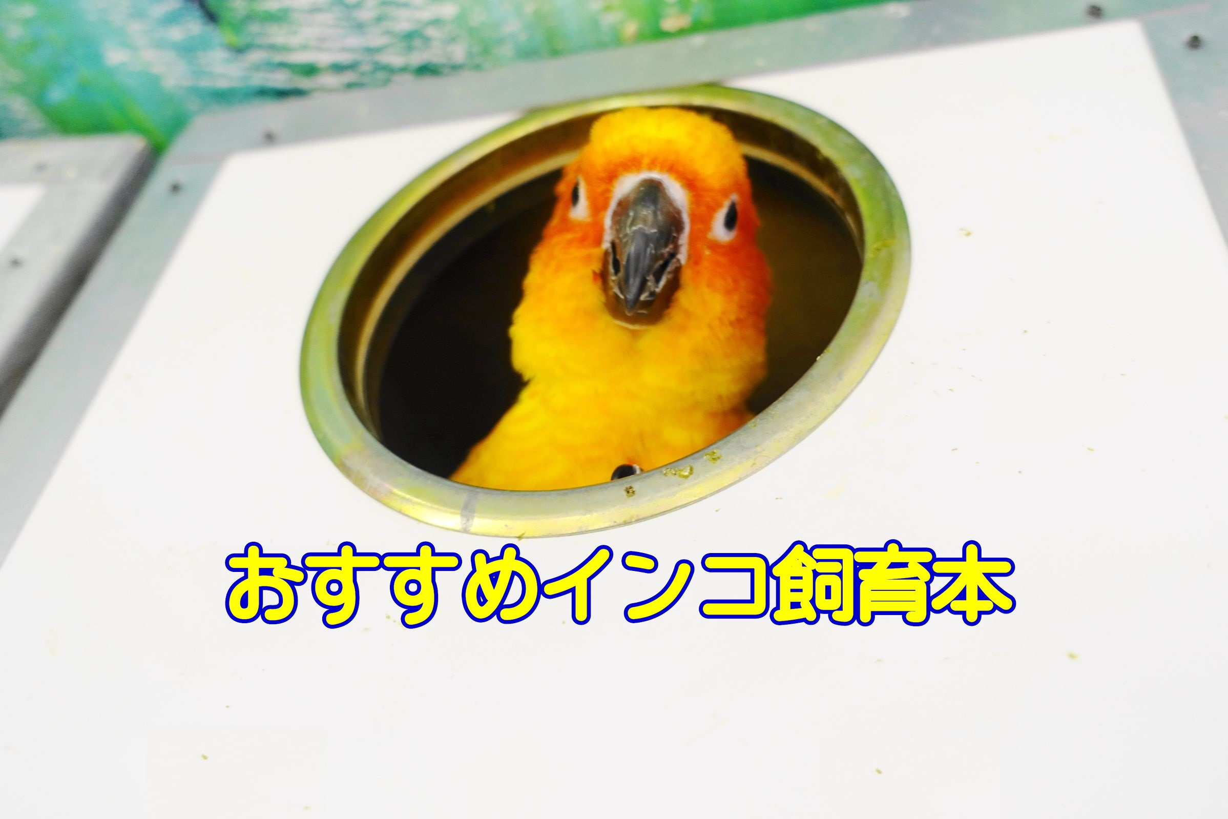 オススメのインコ飼育本