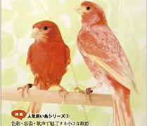 オールバード(ALLBIRDS)が休刊