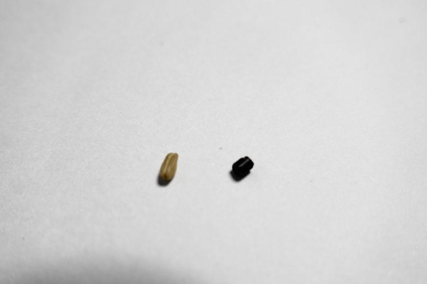 ペレットの異物のサイズ比較「オーツ麦」