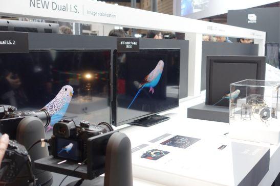 パナソニックのカメラの手ブレ補正機能をセキセイインコで証明