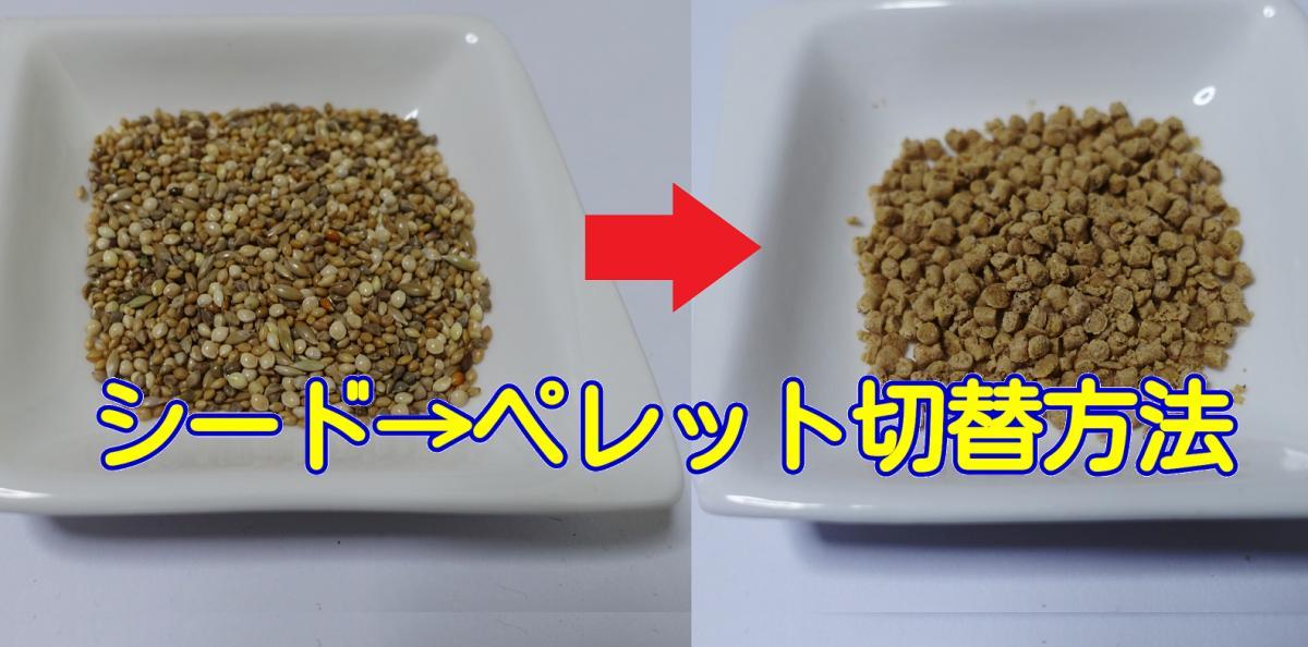 インコの食事をシードから総合栄養食のペレットへの切り替える方法