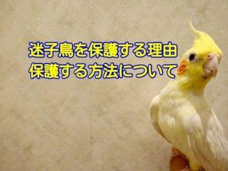 迷子の鳥を保護する理由・保護する方法について