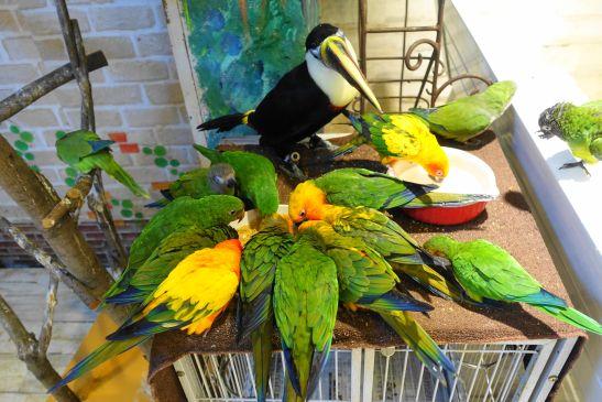 鳥のいるカフェの食事の様子