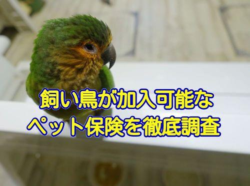 鳥が加入できるペット保険・動物保険の調査