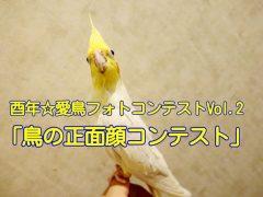 愛鳥フォトコンテスト「鳥の正面顔コンテスト」