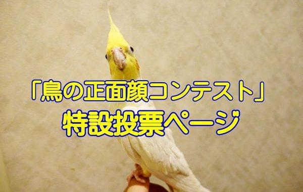 酉年☆愛鳥フォトコンテスト「#鳥の正面顔コンテスト」の特設投票ページ