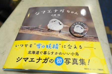 シマエナガちゃん・シマエナガの写真集
