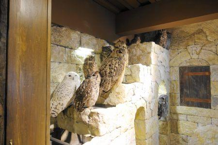 鳥のいるカフェ六本木店のフクロウは広々とした空間で伸び伸び