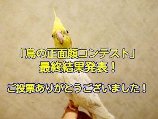 鳥の正面顔コンテストの結果発表