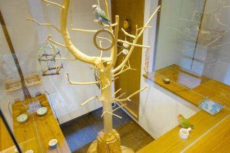 インコカフェ「LoveBird Cafe CHERRY」のインコルームの止まり木