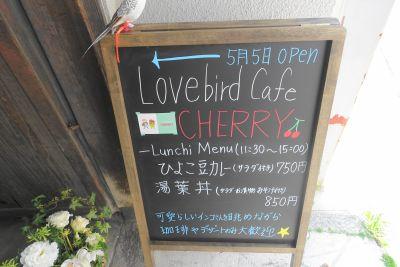 京都のインコカフェ・Lovebird cafe CHERRY