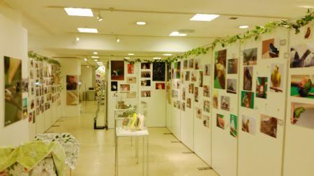インコと小鳥の作品展の写真展