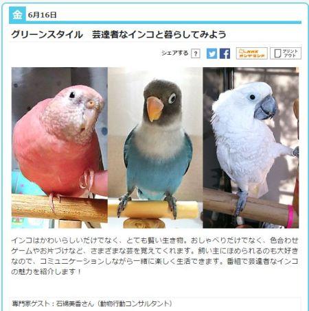 NHKあさイチグリーンスタイルでインコ特集