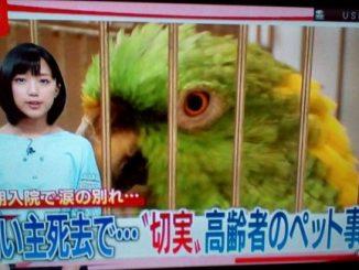 スーパーJチャンネルで「高齢者のペット事情」特集!認定NPO法人TSUBASAも紹介