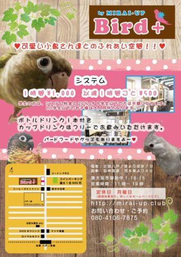 東大阪の鳥カフェ「MIRAI-UP Bird+」(バードカフェ)がオープン