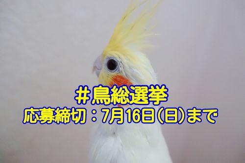 酉年☆愛鳥フォトコンテストVol3「鳥総選挙」