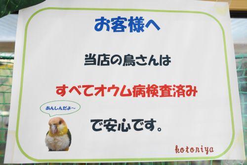 千葉の鳥カフェ「kotoriya」の告知情報