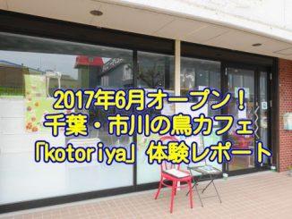 20170719_inko_011_eye