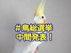 「鳥総選挙」愛鳥フォトコンテストの中間発表