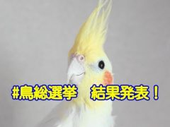 鳥総選挙の結果発表