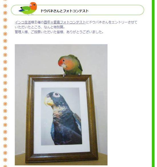 鳥総選挙の特別賞受賞者による紹介