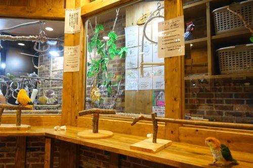 名古屋から行ける愛知県岡崎市の鳥カフェ「鳥茶かふぇTORIKOYA」の店内の雰囲気・様子