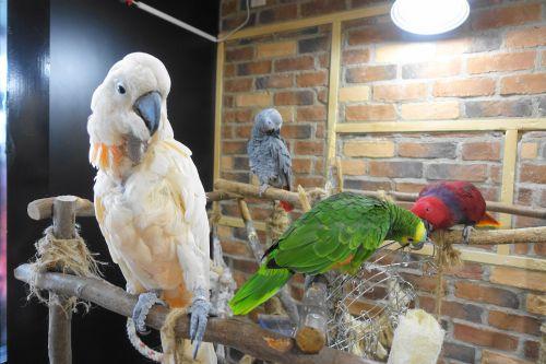 名古屋から行ける鳥カフェ「鳥茶かふぇTORIKOYA」の鳥スペース