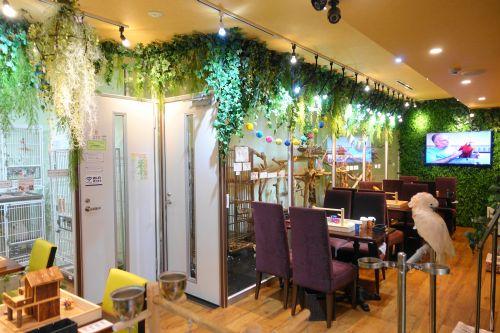 関西のインコカフェ「The Step Up OSAKA」の店内の様子・雰囲気その2