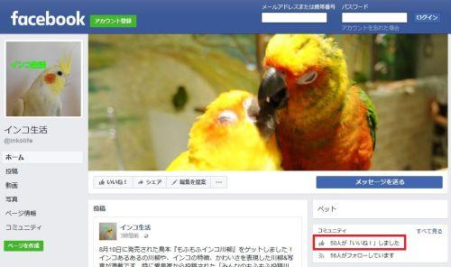 インコ生活のフェイスブックページのいいね数が50を達成