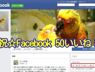 インコ生活のFacebookページのいいね数が50を達成