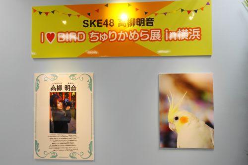 SKE48の高柳明音さんの写真展「I ♥BIRD ちゅりかめら in 横浜」