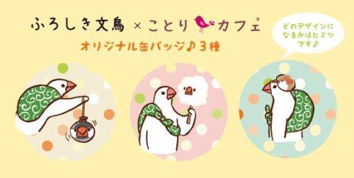 鳥フェス博多の入場特典のことりカフェ「ふろしき文鳥」缶バッチ