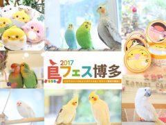 鳥イベント・鳥フェス博多が九州に初上陸!
