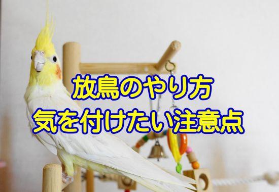 愛鳥(インコ・文鳥など)の放鳥のやり方・注意点・気を付けるべきポイント