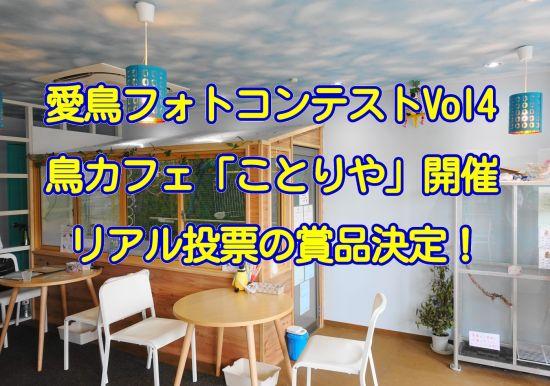 千葉・市川の鳥カフェ「kotoriya」にて愛鳥フォトコンテストのリアル投票イベント開催!