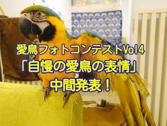 愛鳥フォトコンテスト「自慢の愛鳥の表情」中間発表!