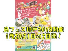 鳥フェス神戸2018開催