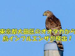 東京都の大田区で発見されたオオタカから鳥インフルエンザ陽性反応
