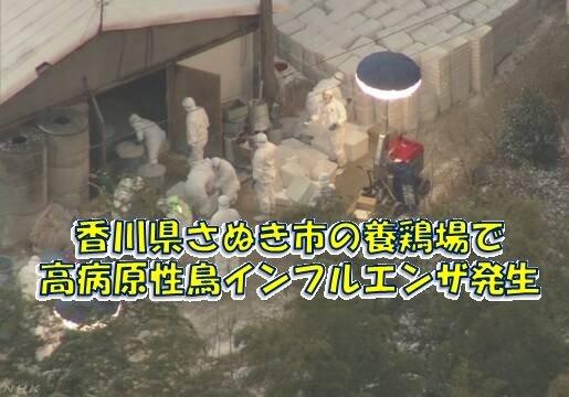香川県さぬき市の養鶏場のにわとりから高病原性鳥インフルエンザが発生