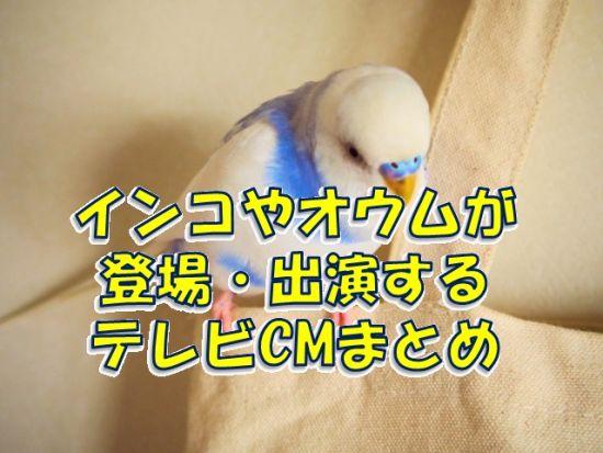 インコ・オウムが登場するテレビCMまとめ