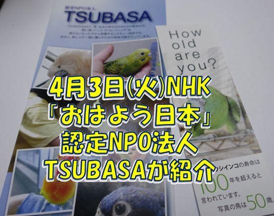 NHK「おはよう日本」で認定NPO法人TSUBASAが紹介!長寿のオウムとの向き合い方