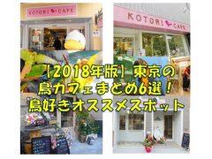 2018年版の東京の鳥カフェまとめ!鳥好きオススメスポット