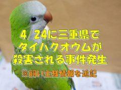 タイハクオウムが殺害される事件が、三重県で2018年4月24日に発生(飼い主様の情報を追記)