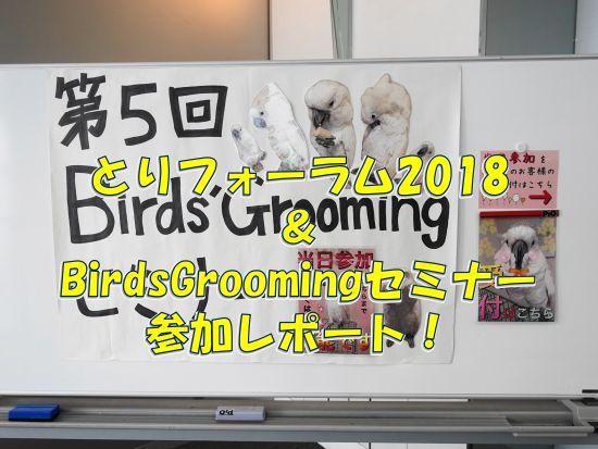 とりフォーラム2018とBirds' Groomingセミナーの参加・体験レポート