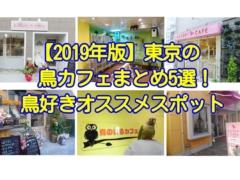 2019年版の東京の鳥カフェまとめ5選!鳥好きオススメスポット