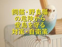 飼い猫・野良猫の危険から愛鳥を守る対策・自衛策