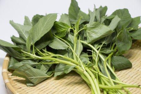 モロヘイヤは緑黄色野菜でもインコには有害な野菜か?
