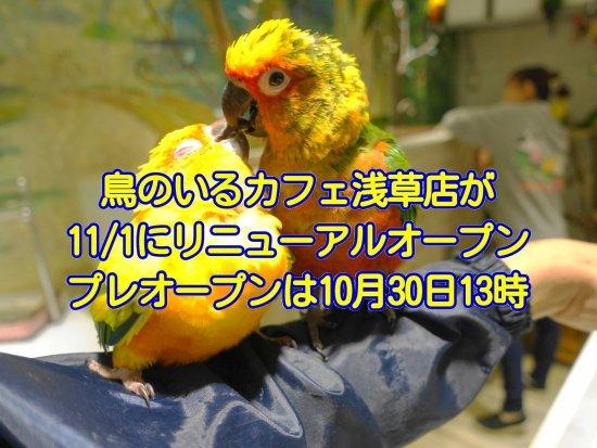 鳥のいるカフェ浅草店が11/1にリニューアルオープン!プレオープンは10/30の13時から
