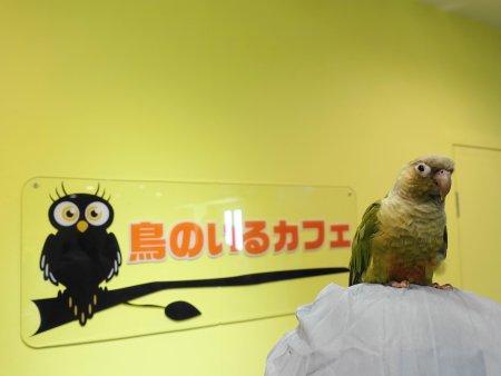 2018年11月1日にリニューアルオープンした「鳥のいるカフェ浅草店」の体験レポート記事