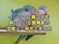インコや文鳥などの鳥を飼っている愛鳥家の芸能人・有名人まとめ
